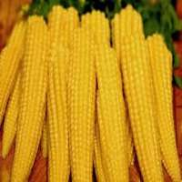 玉米笋 制造商