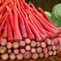红胡萝卜 制造商
