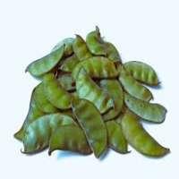 风信子豆 制造商