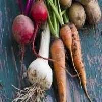 根茎类蔬菜 制造商